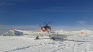Abeille skis